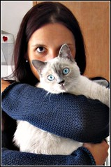 I see you (lanamorvai24) Tags: blue pet eye cat ojos gato mirada mascota
