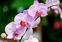 (radvisions) Tags: orchid flower art texture nature beauty flow pattern creative vivid symmetry depthoffield repetition balance curve