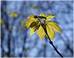 New Leafs (tittytwister11) Tags: berg germany deutschland leaf e 400 grn blau blatt zuiko 2010 evolt bookeh olympuse400 oermter