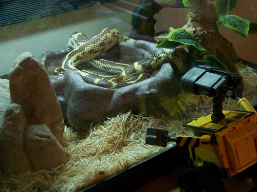 WALL-E and the King Snake