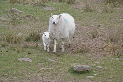 mother and baby (megus77) Tags: trip mountains southwales wales nationalpark valleys merthyr breconroad megus77 magdalenameggarczynska