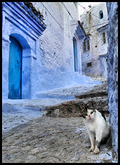 Hello Kitty ! (Bashar Shglila) Tags: street blue houses mountains cat doors village morocco maroc atlas marocco chaouen chefchaouen rif chefchaoun  chefchouen chouen    supershot    mywinners     theunforgettablepictures chaoun   mygearandme mygearandmepremium mygearandmebronze mygearandmesilver mygearandmegold mygearandmeplatinum mygearandmediamond
