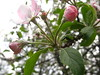 fiori rosa che devo ancora identificare