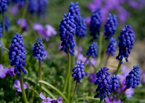 montisfont flowers3