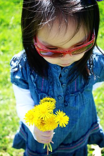 daffodils & dandelions