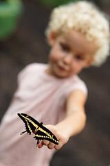 baudchon-baluchon-mindo-papillons-41