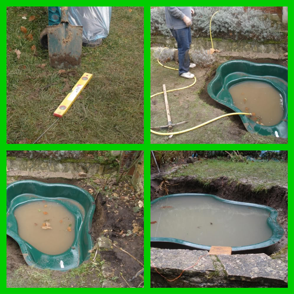 mon p'tit bassin dans mon p'tit jardin - Page 2 4542873571_7151607aaa_o