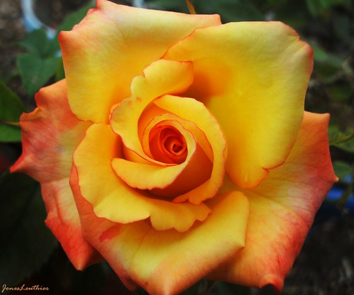 Um Desabrochar - Quinta Flower - #Explore 4