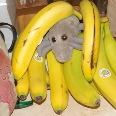 Banana Mite