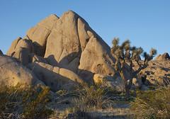 Joshua Tree (KGHofSF) Tags: california nature landscape photography dawn photo nationalpark rocks joshuatree mojave mojavedesert yuccabrevifolia joshuatreenationalpark kghofsf