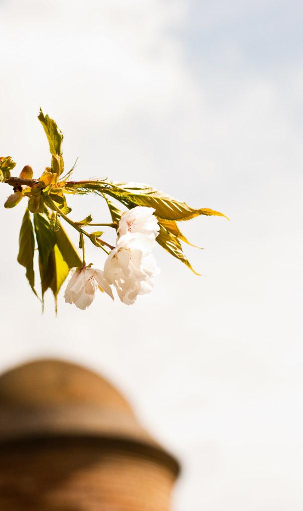 030510_ Blossom #4