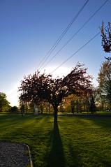 0940 (Matthew7777) Tags: sunset wisconsin spring wi appleton treeonfire telulahpark