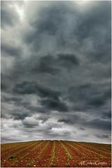 Profumo Di Pioggia, Ignago (VI) - Smell Of Rain, Italy (Enrico Grotto) Tags: color landscape italia nuvole cielo campo nikkor acqua colori tempo luce paesaggio collina vanguard vicenza 1224 meteo temporale veneto nubi frumento acquazzone d40 cluod grottoenrico