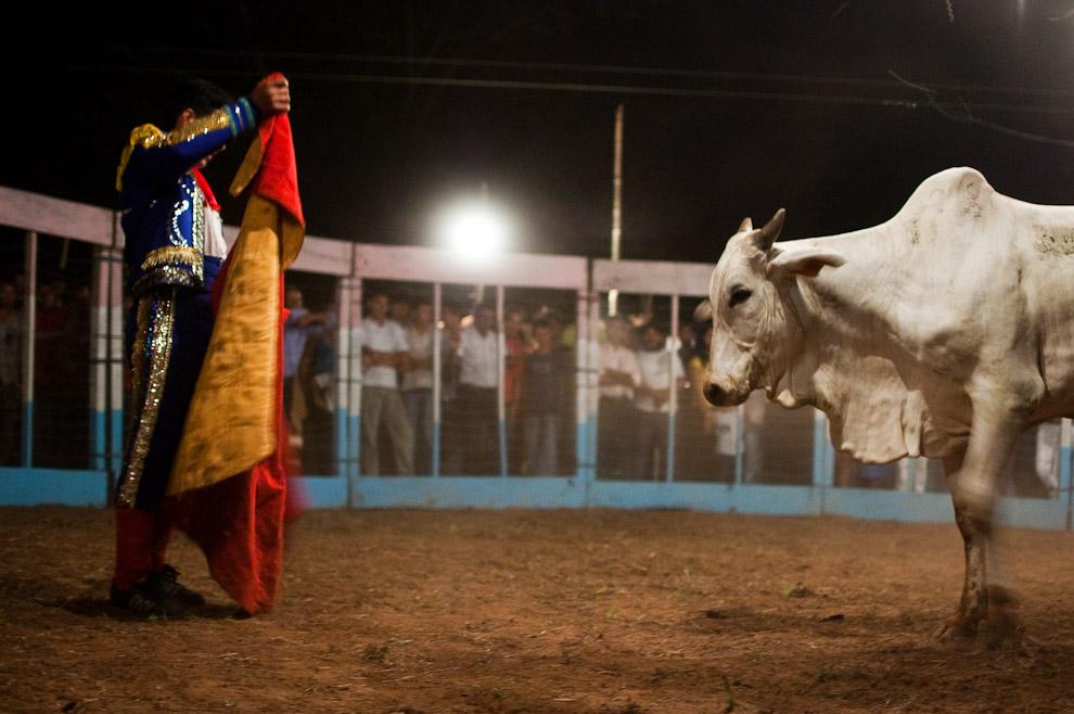 El torero está frente a frente con su ejemplar nelore de 300 kilos que corresponde al primero de la noche. A pesar del uso del capote rojo hay diferencias con las auténticas toreadas de España, en el caso de nuestro país a los toros no se les castiga o mata, sino que el enfretamiento con el toro es de cuerpo a cuerpo, donde la fatiga y doblaje de rodillas del toro se considera victoria para los toreros. (15 de Agosto, Paraguay - Elton Núñez)