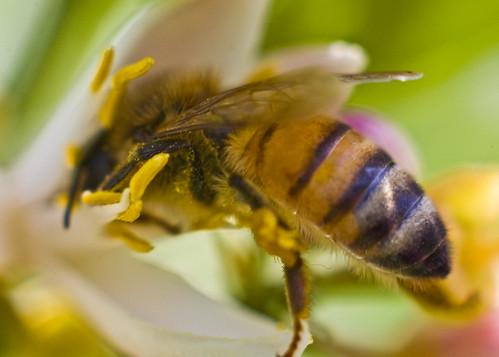 Bees__May062010_0027