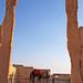 Camels in Palmyra (Arabic: تدمر Tadmur), Syria