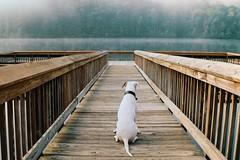 Zen Morning (MilkaWay) Tags: wood foothills mist lake fog southcarolina boardwalk hawkwatch milka 2yearsold campingtrip americanbulldog sumtercounty tablerockstatepark sayawww milkamonday andhaveagreatweek