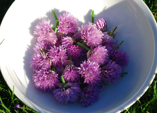 chive flower harvest 1
