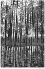 Forest in Katowice (Ben Heine) Tags: trees light wild blackandwhite reflection art nature water monochrome composition forest scary pond nikon poem mare d70 lumire branches poland poetic arbres trunks katowice contrasts fort contrejour waterscape correspondance grays pologne sauvage grandeur charlesbaudelaire theartistery troncs grayness petersquinn benheine