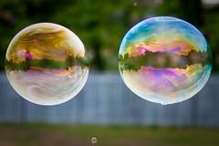 Day 141 - Bubbles (Robert Hough) Tags: canon soap orb bubbles sphere refelction 450d