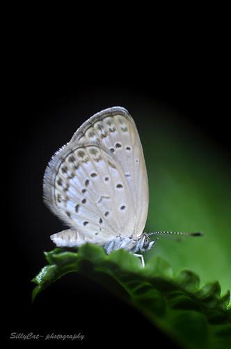 夜蝶-18