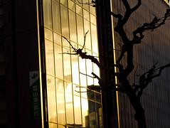 No Title (zilverbat.) Tags: urban sun streetart abstract tree japan architecture modern silhouettes tokio reflectie glaswerk zilverbat weereenswatanders doortekening