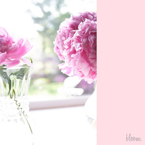 bloom2b