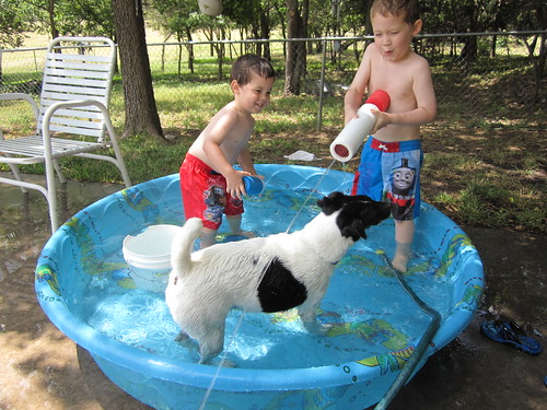 Flash loves to play with the boys in the water!!!