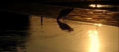 TO SMALL ANGEL ANDREA (l*aura**) Tags: sunset italy sun laura bird water italia tramonto sole acqua uccello sottomarina