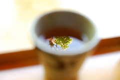 "maple tea (""KIUKO"") Tags: red tree green cup leaf maple tea toyota mapletree  teacup   aichi      asuke    korankei"