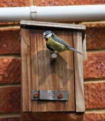 018 (Mungoman) Tags: bluetit nestbox withyoung