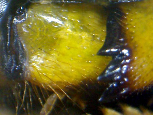 wasp mouth 2