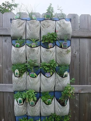 may2010-herbs