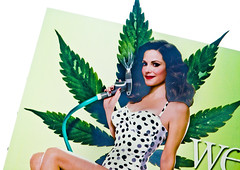 Weeds (Thomas Hawk) Tags: california usa losangeles weeds unitedstates 10 unitedstatesofamerica pot showtime marijuana northhollywood marylouiseparker fav10 sothisisamerica