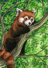 Red Panda in tree ACEO