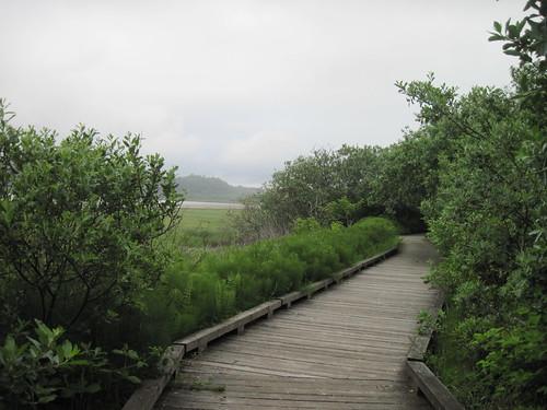Bowerman Basin