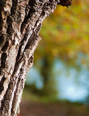The Golden Hour (MeckiMac) Tags: leica tree fall delete10 delete9 delete5 delete2 bokeh delete6 delete7 style delete8 delete3 delete delete4 m8 goldenhour imagecolorstyleformat deletedbydeletemeuncensored