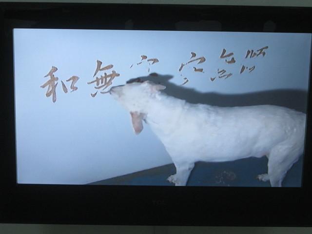 beijing 635