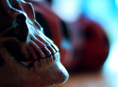 Samhain (ewitsoe) Tags: seattle autumn fall halloween season fun skull 50mm washington nikon candy trickortreat ghost pumpkins samhain pacificnorthwest wa celtic pnw allhallowseve d80