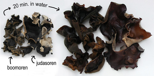 Two types of cloud ear fungus