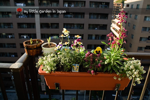 my-little-garden-in-japan-nov-2010-2