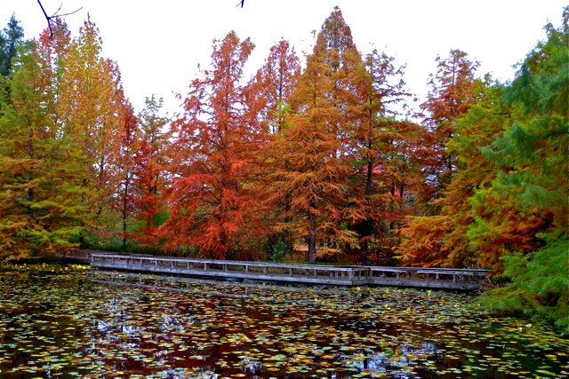 VanDusen   Autumn