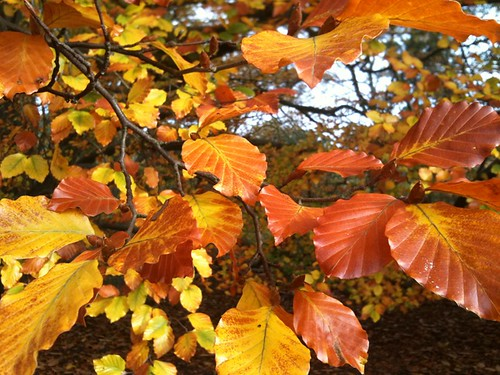 Autumn leaves at The Lodge
