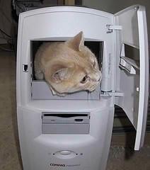 CompuCat