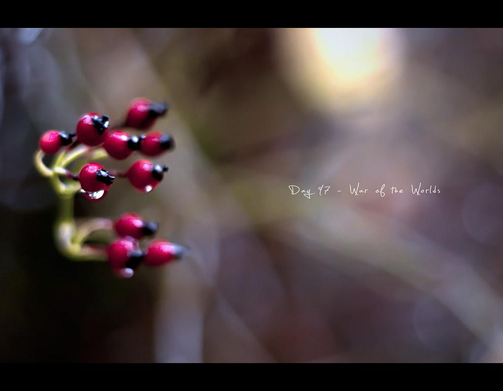 Day 97, 097/365, Project 365, Bokeh, berries, red, alien ships, rain, drops