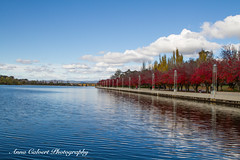 Canberra in autumn (Anna Calvert Photography) Tags: australia canberra autumn flowers landscape landscapephotography nature naturephotography plants scenery statues trees carillion lakeburleygriffin lake park