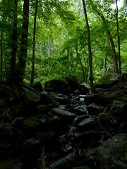 Scout Run (Dendroica cerulea) Tags: stream creek brook ravine forest trees landscape summer musconetconggorgepreserve hollandtownship hunterdoncounty nj newjersey