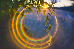 The lens,the sun,the flare! (petrapetruta) Tags: flare rainbow summer light leaves glowing freelens sonya7
