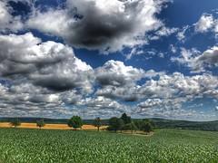 MTBTour über die schwäbische Alb zur Donau (Blende2,8) Tags: mais maisfeld weizenfeld iphone schwäbischalb wald bäume badenwürttemberg deutschland himmel wolken wiesen felder