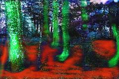Bosque (seguicollar) Tags: árboles troncos branch ramas rojo green verde red imagencreativa photomanipulación art arte artecreativo artedigital virginiaseguí bosque